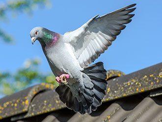 Google's Recent Update: The Pigeon Update